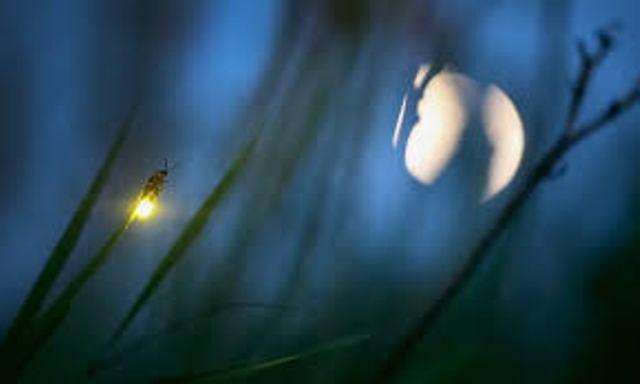 La luciernaga celeste